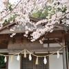 春雨の中で桜が揺れる、唐津市鏡神社の動画・桜の春篇。