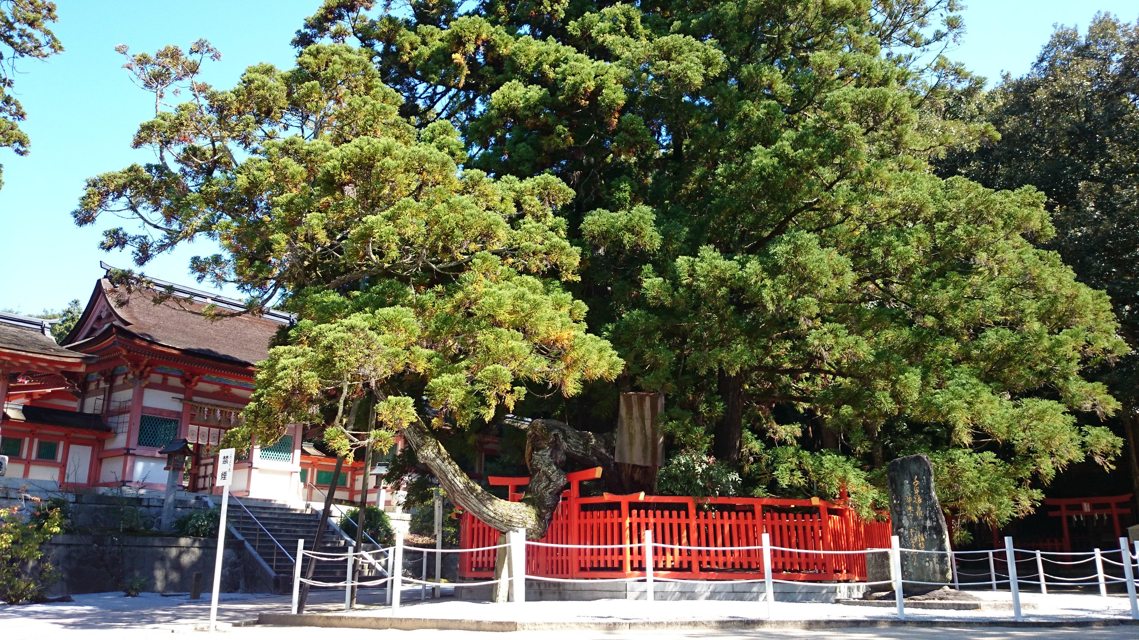 古代から続く九州の勅祭社、神功皇后ゆかりの福岡市の「香椎宮」。
